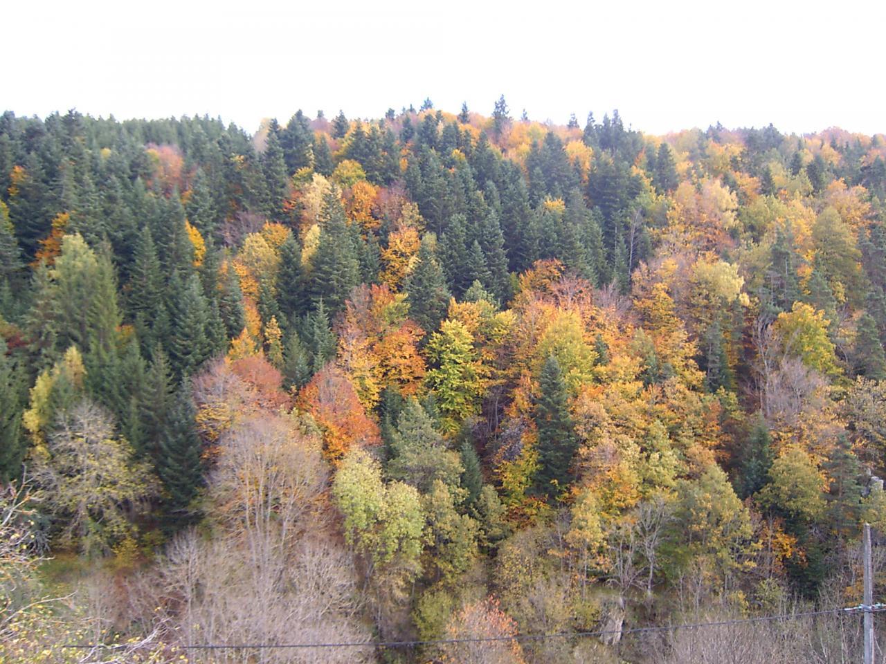 Automne vallee de l'Allier